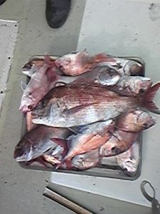 明石海峡の釣りを楽しく!情報交換の場 会長さん  昨日は荒れている天候でしたが今日は穏やかな釣り日和、友人と鯛釣りに出ました。朝に込み潮で