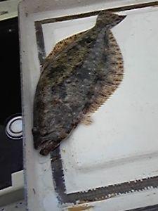 明石海峡の釣りを楽しく!情報交換の場 会長さん  穏やかな日になりましたので、釣りに出ましたが、今日もヒラメ1匹です。釣り方など勉強・修行