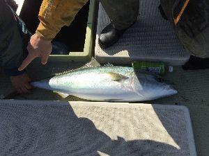 明石海峡の釣りを楽しく!情報交換の場 むーさん  昨日もありがとうございました!  自己ベスト更新の93cmありました。  楽しかったー