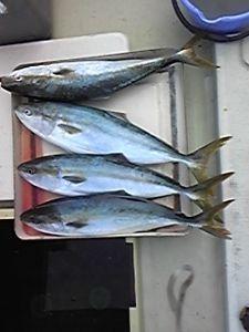 明石海峡の釣りを楽しく!情報交換の場 会長さん  今日は有難うございました。  天候が良くなったので、昨日今日とメジロ釣りに行ってきました
