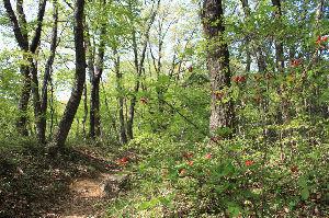 OO町の人気のない喫茶店 雑木林の景色が日々変わり緑が濃くなってきた。  ほぼ毎日丘陵地を歩き回り若葉の香りや花を楽しみ自然と