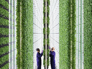 Food Tech Plenty Announces a New Vertical Farm Facility in t