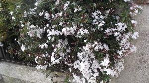 掲示板はいりたいのにしり込みしてるあ・ ごんさんこんばんは たくさんのきれいなバラの写真 ありがとうございました 世の中「○○ずくし」なる言