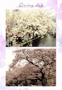 出来るかな |^・ω・)/ ハロー♪  昨日はお花見日和だったので、朝とは思えないほどのお花見🌸宴会