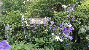 読書の記録♪ こんばんは。 暑いので、本が読めない。 近くの花の寺までお散歩。 桔梗が満開でした。  桔梗の花言葉