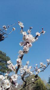 読書の記録♪ こんばんは。 急に暖かくなりましたね。 桜の開花ももうすぐでしょうか。  市の管理している梅園の梅を