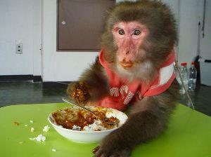 2656 - (株)ベクター サル子さん速報‼️  ただいま晩御飯を食べたばかりなのに  今度はまただいすきなカレーを食べ始めまし