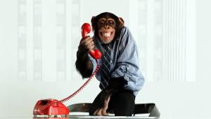 4772 - (株)デジタルアドベンチャー チンパン本社より事務連絡でふ ぶわっかもーんwwwww