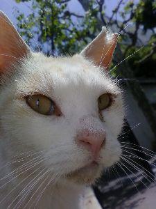 アーシュラマ 御近所猫、名前はまだない。