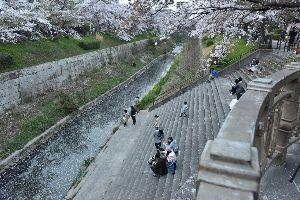 ◎フランス好きを自負する者達の集う場所◎ 今年の桜は名古屋では3月28日に超早く咲いてあっという間に散りました。 本当にこの時期だけ一瞬だけ咲