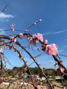 3747 - (株)インタートレード 「心」に花を咲かせて 下さいね^^♪  この「花」のように!  旅先にて ニンニン忍耐^^辛抱♪