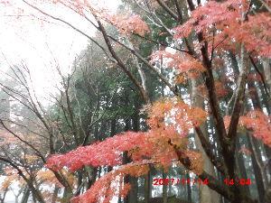 1 英さん、こんばんわ~(^-^)  先ほど旅行から帰って来て一息ついています😊 今日は一日中雨でとても