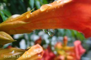 男は嫌いです 上州相馬村も梅雨+梅雨寒です すばるさん ツツジさん みなさん こんにちは。  寒くて小雨なので外に