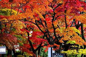 お好きなお写真をお披露目しませんか? 何か同じ人の写真ばかりなので、たまには変わった人間も参加します、  先月写した福島県の紅葉です。