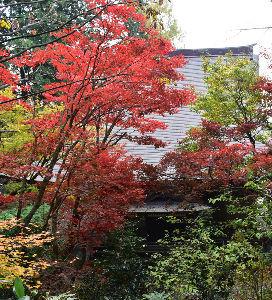 お好きなお写真をお披露目しませんか? こちらの 秋の風景です。