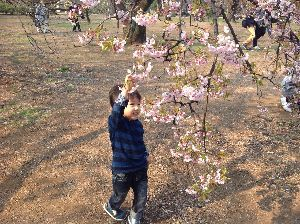 7181 - (株)かんぽ生命保険 簡保にもやがて春は来にけり、彼岸会や。