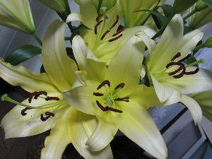 7446 - 東北化学薬品(株) 今年も黄色い百合の花束の株主優待をありがとうございました。  http://blogs.yahoo.