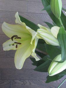 7446 - 東北化学薬品(株) 今年も百合の花をありがとうございました。