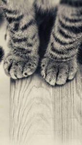 求む!猫飼人 癒し