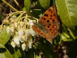 気まぐれな呟き 春になると 蝶も子孫を残すために 秋から寒い冬をじっとこらえて耐えてきて 今は幸せな時期なんだろうな