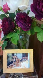 介護生活 8回目の命日が過ぎていきます。  今年もバラがきれいに咲いていますよ。 毎日お庭を一緒に見て回って、