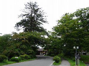 西部中4組「りんどうの会」集まれ! 9月2日(日)の軽井沢は生憎の小雨だったが、傘を差すほどでも無し。 それよりもさすが軽井沢、20℃あ