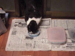 気楽に おいで 🍓たみ子さん 猫がエサ食ってくれないと帰れないので そっとしてますが 中々食べない時は捨てて食べた事