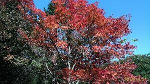 気楽に おいで 三日坊主です。  昨日は突然、鳥取県との県境にある 県立森林公園へ出掛け、自然を見物。 けんさんの近