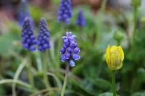いろいろ写真館~♪♪ 皆さん~こんにちは♪  春の天気は三日の晴れなしで、今日は朝から雨です。  家の庭にも春が来ました(