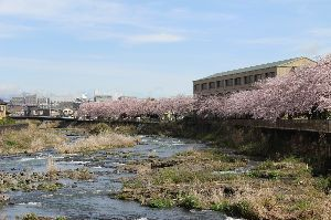いろいろ写真館~♪♪ 皆さん~おはよう♪  今年は、桜の葉の紅葉見ないで終わりました。  台風24号の塩害で、桜の葉が紅葉