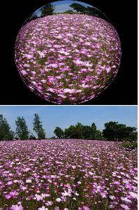 フオトコラージュや画像加工、合成写真の勉強部屋 自作フイルターで球体風撮影しコラージュを少し加える、商業写真に使用する。   (下 通常風景  上