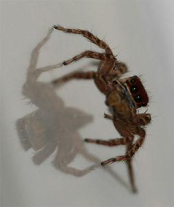 クモ類の部屋 じゃぁ~、参加。どう?