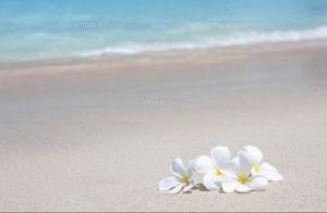 なんでも書きね。(^▽^)/ 暑中見舞い申し上げます  さとちゃん ぴよさん アニーさん 暑い日が続きますが… 水分