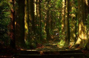 山に登ろう GWは 観光しながら 熊野古道をハイキング 太い杉並木の中を マイナスイオンいっぱいいただいて来まし