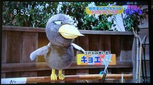 笑点 「チコちゃんに叱られる!」  NHKの番組です。最後に視聴者からのお便り紹介コーナーがありますが、先