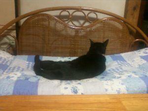 我が家の猫自慢にゃー。。 例のメス猫です