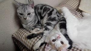 我が家の猫自慢にゃー。。 こんな過疎スレに返信ありがとう。。 ベン君かっこいい。 ベランダ2Fですか?? 外に飛び出したりしな