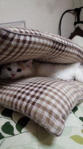 我が家の猫自慢にゃー。。 写真ありがとにゃー。。  いつでも気が向いたら貼ってほしいにゃー。。  今日はスコのラオウが朝から下