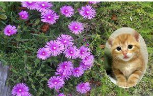 我が家の猫自慢にゃー。。 マンチカンのヾ(=゚・゚=)ノニャン♪の模様が一番  ネコちゃんらしいね。❤
