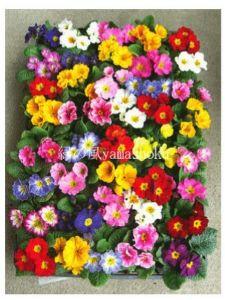 (*_*; い や し、い や さ れ、そ い、そ わ れ・・・ *****  *ショウさん  *みなさん  *こんにちは  さき、3月、花苗、花壇、定植  添付、通