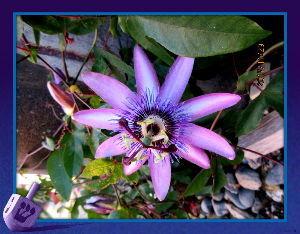 毎日サンデー・・・・・ 快晴の小春日和は今日までのようだね・・・  暖かな日が続いたので思い切って庭の整理を・・・  賑やか