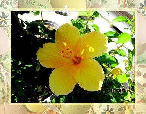 毎日サンデー・・・・・ 今朝も涼しさに起こされてしまいました・・・  庭に出て軽いストレッチで体をほぐす・・・  昨日の定期