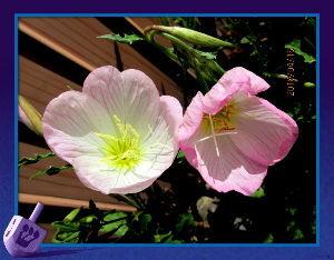 毎日サンデー・・・・・ 燕が元気よく飛び交う姿が目に付く季節に・・・  陽射しが強いが風がちょい冷たい感じの日和・・・  家