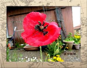 毎日サンデー・・・・・ 先ほどからやっと青空が見え始めたね・・・  昨夜の雨で庭の花も大分痛んだようデス・・・  やっと咲き
