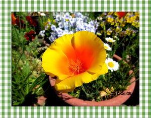 毎日サンデー・・・・・ 今朝は三月の寒さに逆戻りだね・・・  吹き抜ける風が一段と冷たい・・・  日中は薄日が射しても気温上