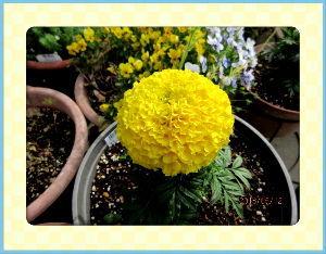 毎日サンデー・・・・・ 早朝は寒さ感じましたが  日中は暖かさが戻り過ごしやすい日和に・・・  暇つぶしに庭の草取りと片付け