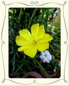 毎日サンデー・・・・・ 爽やかな風が部屋に入り込み快適な夏日に・・・  庭に出れば日差しが強く暑さを感じるね・・・  庭の花
