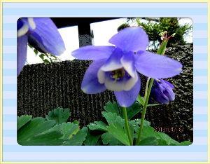 毎日サンデー・・・・・ 午後から天気回復して初夏の爽やかさに・・・・  庭の花も恵みの雨を貰い元気に咲き出したね・・・  季