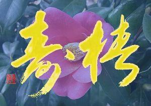 書道作品掲示板 椿壽(ちんじゅ) 大椿は長生を保っということにあやかって長生きのことを言っています。 背景に椿の花を