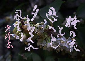 書道作品掲示板 柊の花と思へど夕まぐれ 風生句  風生の句は好きなので名前を大きく書いています。